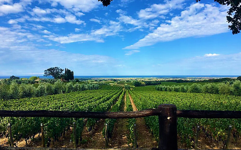 Tuscanyatheart_EXQUISITE WINE TASTING ON THE ETRUSCAN COAST2